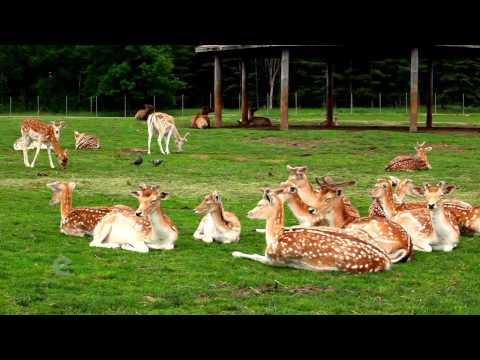 African Lion Safari (Ontario, Canada)