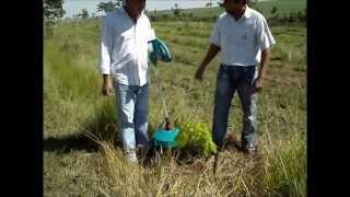 Pulverizador de glifosato puro (SEM ÁGUA). Pulmipur em plantação de seringueira.