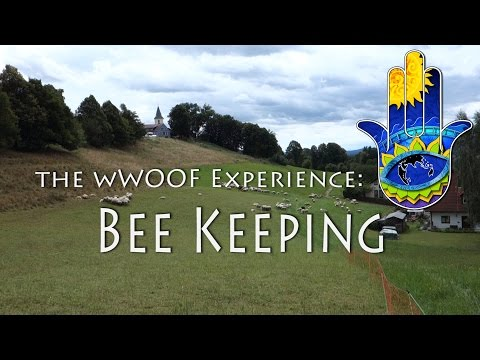 The WWOOF experience: Bee Keeping at Simmelknödel organic farm