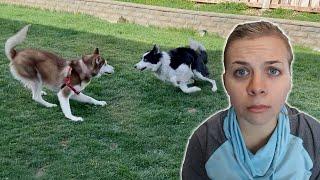 letting-our-dogs-meet-again-vet-trip