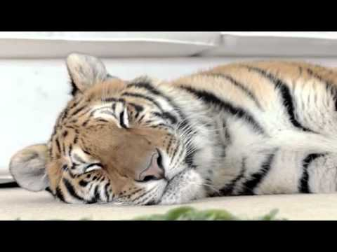 BOSCH VACUUM CLEANER TIGER VIRAL PART 1