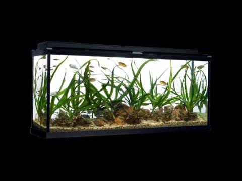 Fluval Premium LED Aquarium Kits