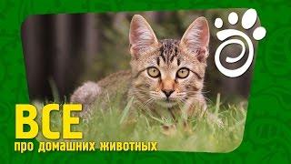 Кошки И Контрацепция. Все О Домашних Животных