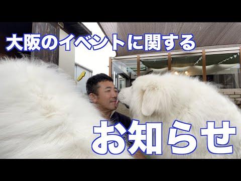 大阪 舞州 イベント延期のお知らせ
