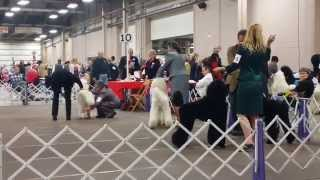 Lehigh Valley Kennel Club Dog Show