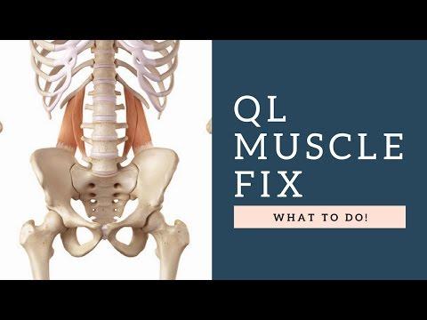 FIX Quadratus Lumborum (QL) Muscle Back Pain By Following These Exercises & Tips!