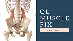 hqdefault - Q L  Muscle Back Pain