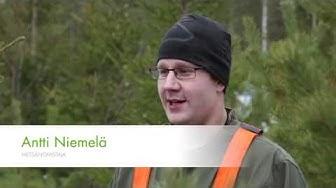 Kasvusta näkee, että hoitaminen kannattaa - UPM Metsä