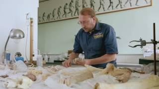 Les experts du passé episode 02/ La boucherie de Caours Inrap