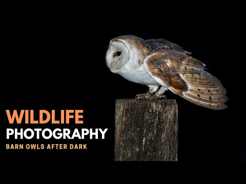 OWL PHOTOGRAPHY | Barn Owls After Dark - Part 2