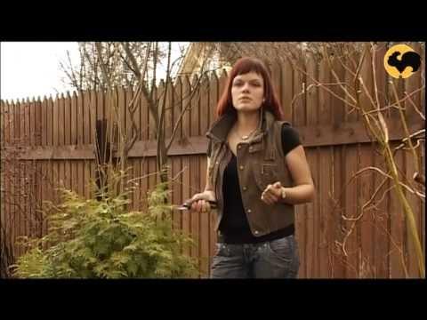 видео: Нетрадиционное Размножение Роз Серия 23