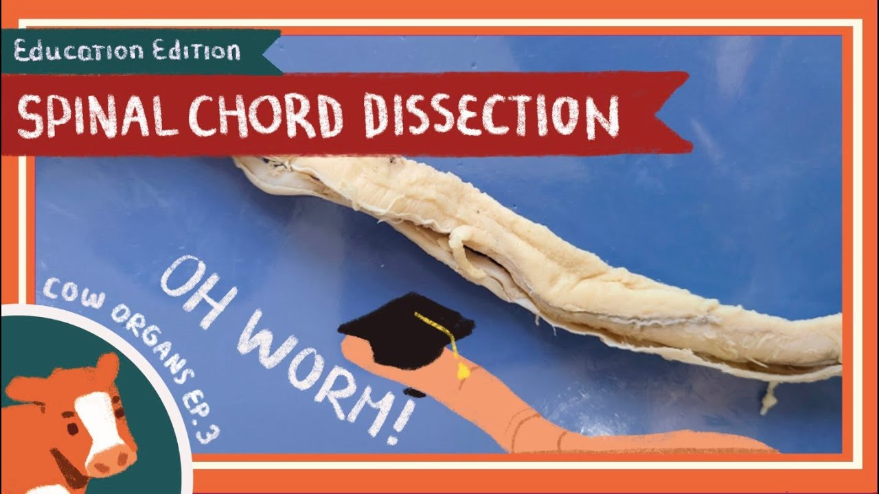 Spinal Cord Dissection || Shiver Down My Spine