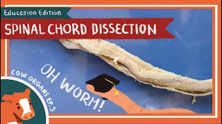 Spinal Cord Dissection || Shiver Down My Spine [EDU]