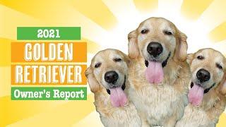 2021 Golden Retriever Survey