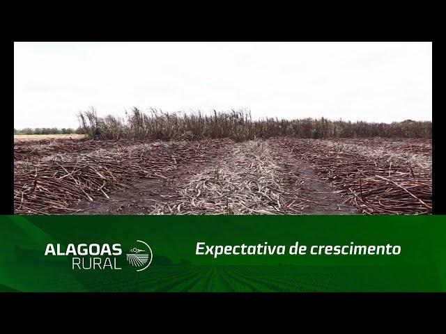 Expectativa de crescimento para no novo ciclo da cana-de-açúcar