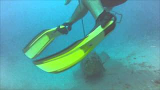 Goliath Grouper Attacks Diver