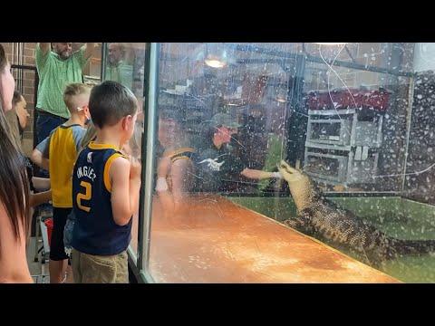 Guests-jump-in-to-rescue-handler-bitten-by-alligator