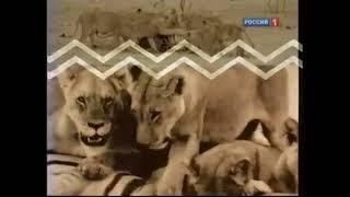 История заставок: Диалоги о животных