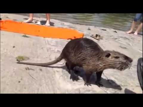 Прикол на пляже » Видео приколы - смотрим бесплатно онлайн