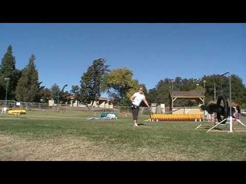 Dog Agility Training Tips - Get Out