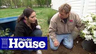 How To Prune And Replace Foundation Plants - This Old House
