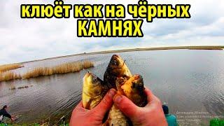 Что Делать Если не Клюёт Рыбалка на Карася ловля на флэт метод и доку