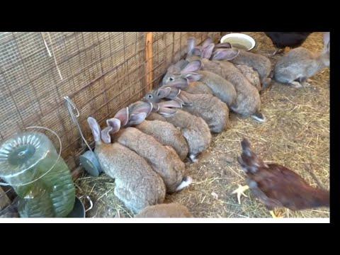 Сажаем кроликов в