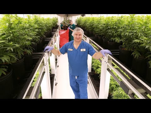 Take a tour inside a licensed cannabis production facility