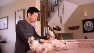 How To Position Your Dog For Grooming Legs And Belly