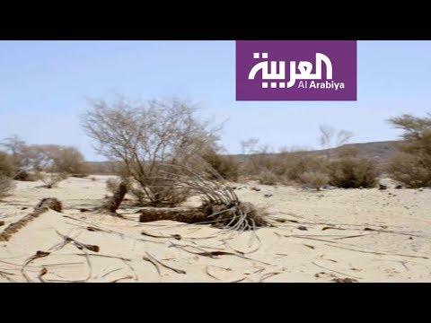شاهد كيف جف -غدير خم- وتحول إلى أعجاز نخل خاوية!  - نشر قبل 2 ساعة