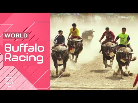 Buffalo Racing in Thailand on Trans World Sport