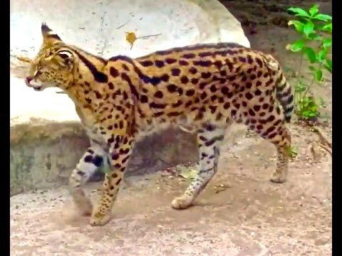 SPECTACULAR - Bahamas - Animals