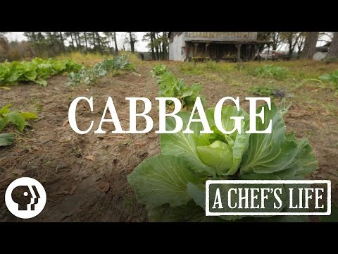Cabbage | A Chef's Life | PBS Food
