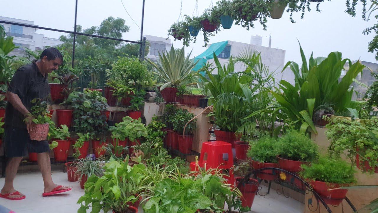Rainy Day on Raksha Bandhan    My Plant Enjoying in Rain    Fun Gardening