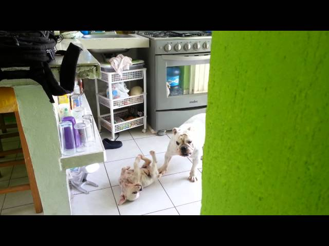 Mamá Bulldog jugando con su hija