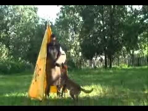 Vyatkins' Malinois Young Dogs - Training, Part 2