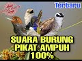 Suara Pikat Burung  Mp3 - Mp4 Download