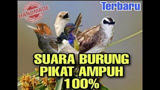 Suara Pikat Burung