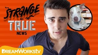 Dog Seriously Ate My Homework! | STRANGE BUT TRUE NEWS