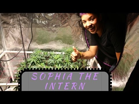 Big Worm Teaches Sophia the Intern - No till, Organic, Biological Cannabis Growing