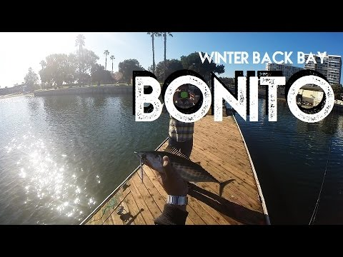 Winter Back Bay Bonito | San Diego Fishing | Happy New Year 2017 | Catch & Release