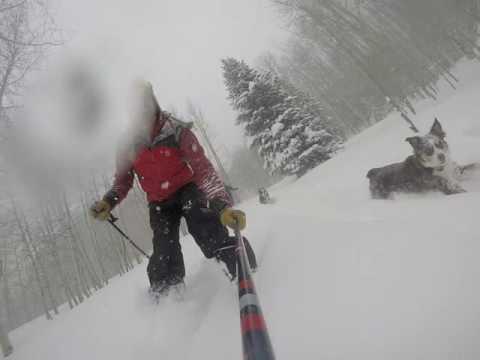 PuppyFinder.com : Christmas Morning Skiing