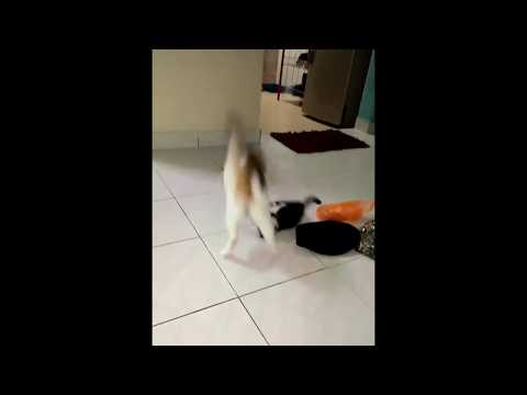 Funny Cat | Playing