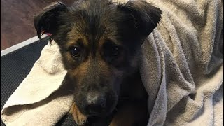 Rescue of a dog called Annie - Episode 1(2019) . In this episode yo...