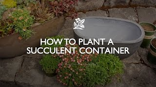 How to Plant a Succulent Container | Monrovia Garden thumbnail
