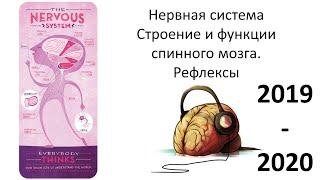 6. Нервная система СМ (8 класс) - биология, подготовка к ЕГЭ и ОГЭ 2020