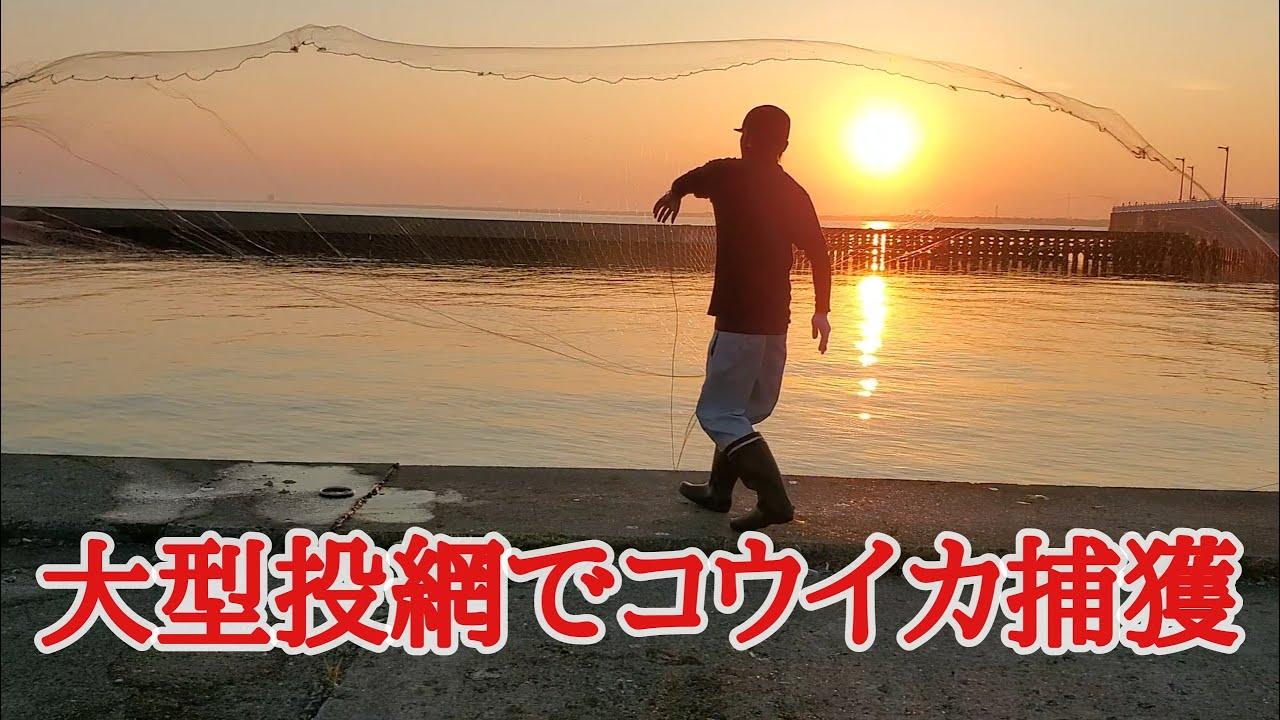 【VLOG24】海投網 コウイカ シリヤケイカ castnet 2021.06