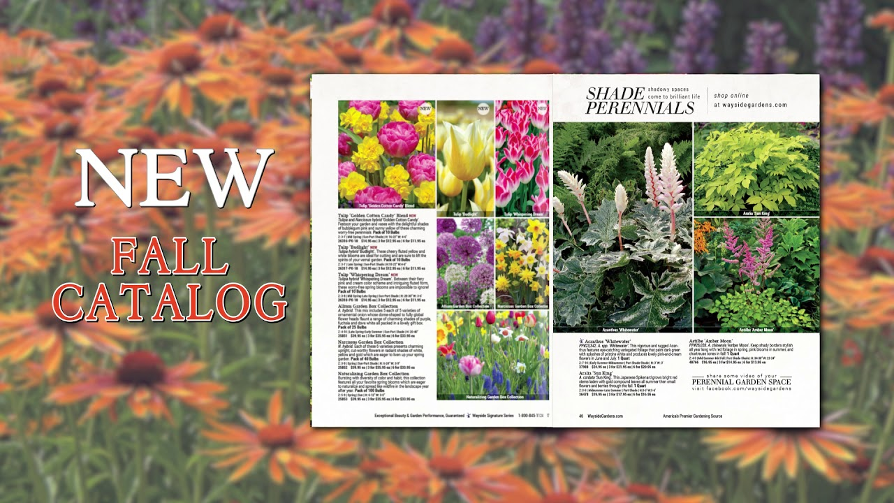 Wayside Gardens Fall 2018 Catalog Youtube