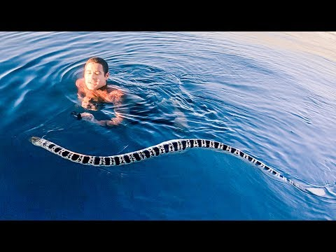 YBS Lifestyle Ep 15 - BIGGEST VENOMOUS SEA SNAKE EVER | First Adventure On Our Mothership