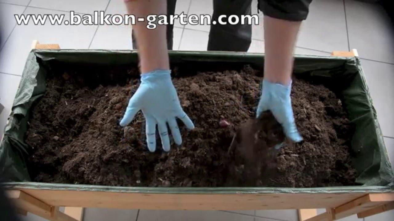 Schnittlauch Umtopfen Ins Selbstgemachte Balkon Hochbeet Youtube